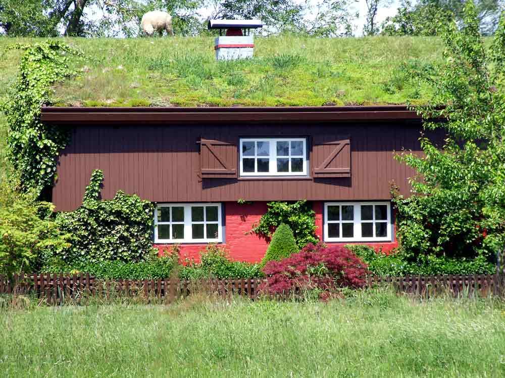 Trend: Dachbegrünung – wie Eigentümer davon profitieren!